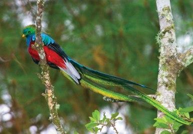 quetzal-bird-2